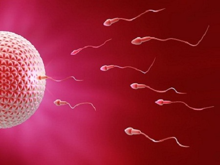 Tinh trùng loãng có gây vô sinh không?